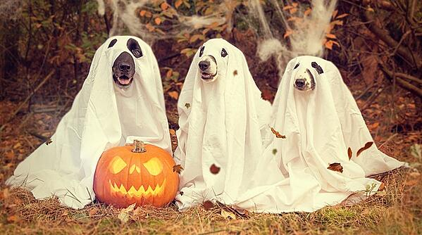 halloween-frases